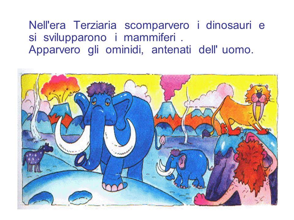 Nell'era Terziaria scomparvero i dinosauri e si svilupparono i mammiferi. Apparvero gli ominidi, antenati dell' uomo.