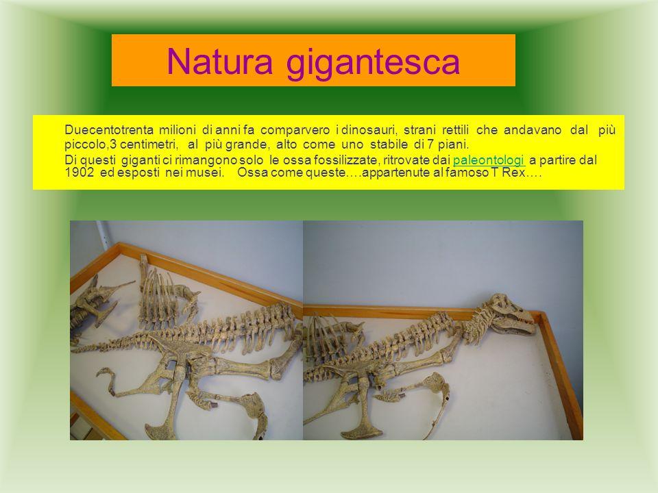 Natura gigantesca Duecentotrenta milioni di anni fa comparvero i dinosauri, strani rettili che andavano dal più piccolo,3 centimetri, al più grande, a