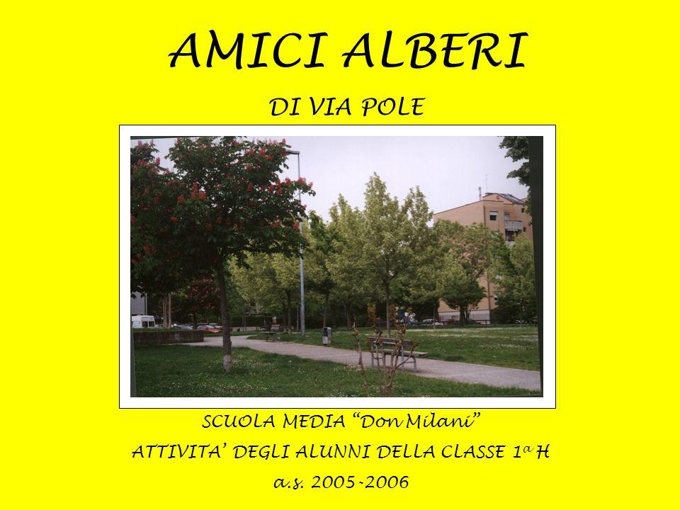 SCUOLA MEDIA Don Milani ATTIVITA DEGLI ALUNNI DELLA CLASSE 1 a H a.s. 2005-2006 AMICI ALBERI DI VIA POLE