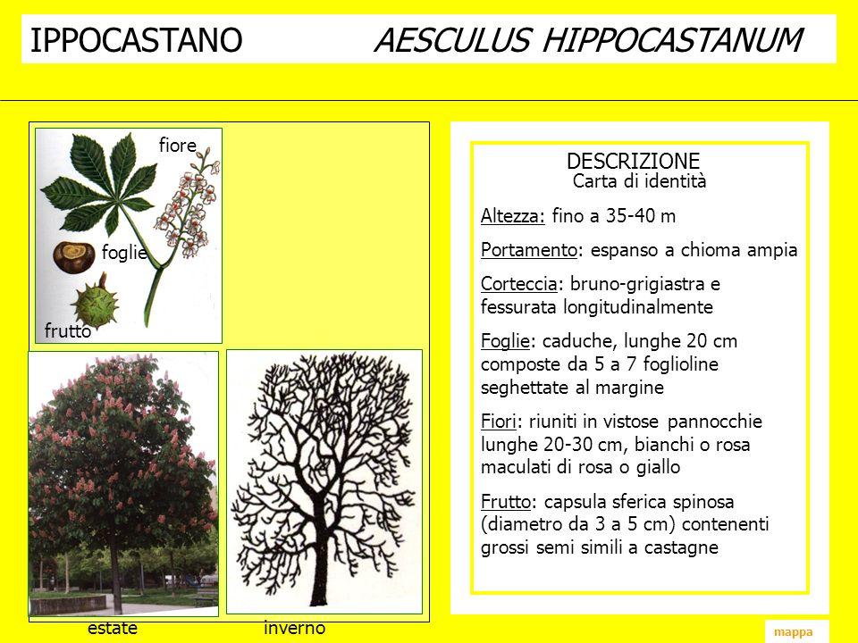 DESCRIZIONE IPPOCASTANOAESCULUS HIPPOCASTANUM fiore frutto foglie estate inverno mappa Carta di identità Altezza: fino a 35-40 m Portamento: espanso a