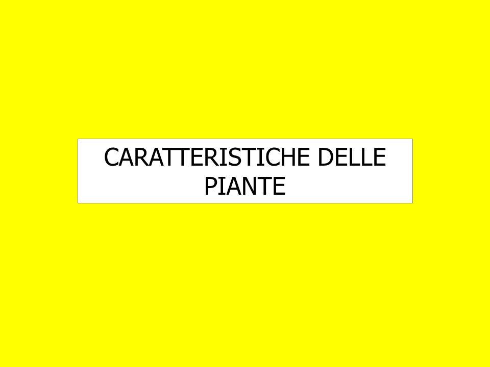 CARATTERISTICHE DELLE PIANTE