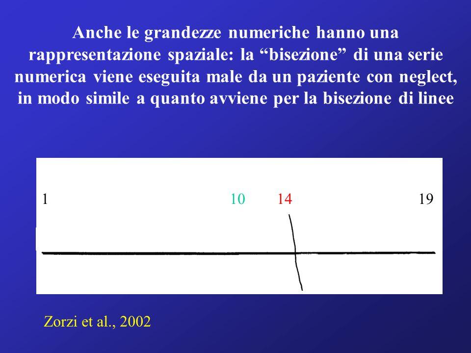 Anche le grandezze numeriche hanno una rappresentazione spaziale: la bisezione di una serie numerica viene eseguita male da un paziente con neglect, i