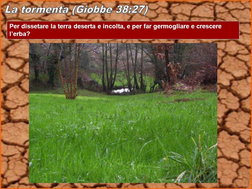 Per dissetare la terra deserta e incolta, e per far germogliare e crescere lerba?
