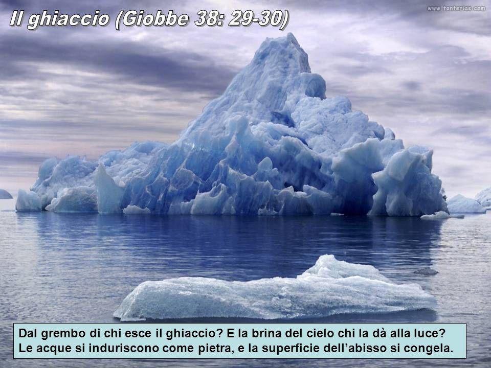 Dal grembo di chi esce il ghiaccio? E la brina del cielo chi la dà alla luce? Le acque si induriscono come pietra, e la superficie dellabisso si conge