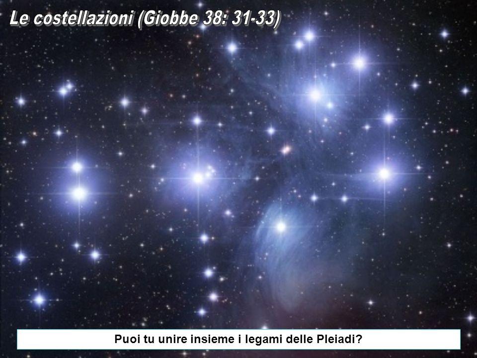Puoi tu unire insieme i legami delle Pleiadi?