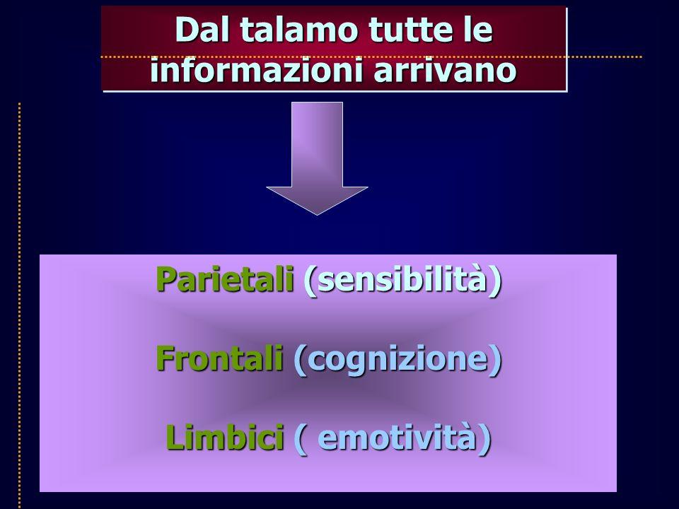 Dal talamo tutte le informazioni arrivano Parietali (sensibilità) Frontali (cognizione) Limbici ( emotività)
