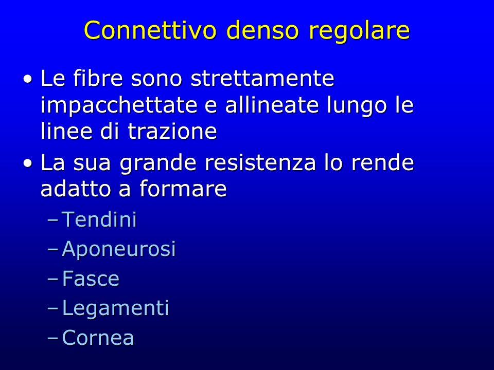 Connettivo denso regolare Le fibre sono strettamente impacchettate e allineate lungo le linee di trazioneLe fibre sono strettamente impacchettate e al