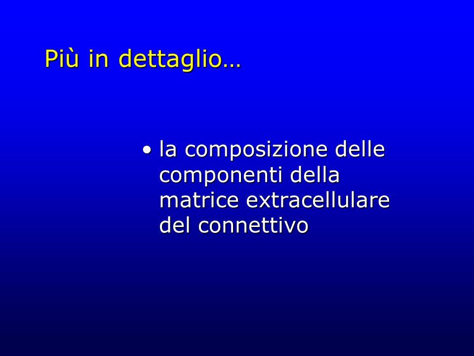 Più in dettaglio… la composizione delle componenti della matrice extracellulare del connettivola composizione delle componenti della matrice extracell