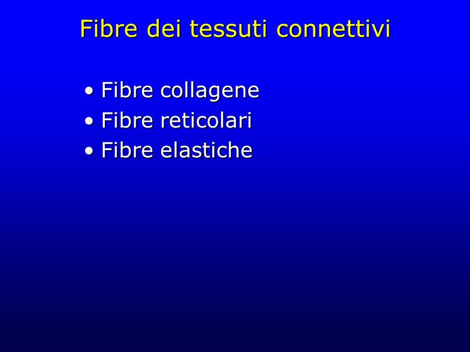 Fibre dei tessuti connettivi Fibre collageneFibre collagene Fibre reticolariFibre reticolari Fibre elasticheFibre elastiche