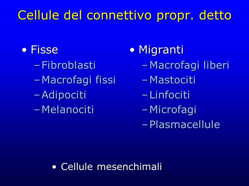 Cellule del connettivo propr. detto FisseFisse –Fibroblasti –Macrofagi fissi –Adipociti –Melanociti Migranti –Macrofagi liberi –Mastociti –Linfociti –