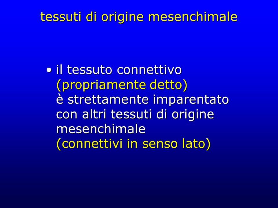 tessuti di origine mesenchimale il tessuto connettivo (propriamente detto) è strettamente imparentato con altri tessuti di origine mesenchimale (conne