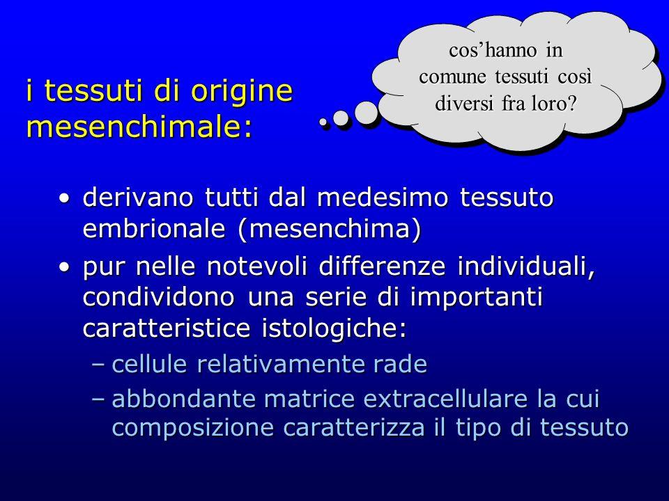 i tessuti di origine mesenchimale: derivano tutti dal medesimo tessuto embrionale (mesenchima)derivano tutti dal medesimo tessuto embrionale (mesenchi