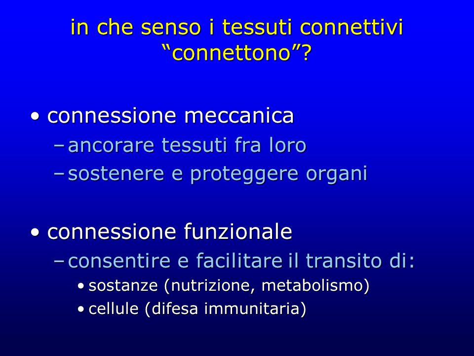 in che senso i tessuti connettivi connettono? connessione meccanicaconnessione meccanica –ancorare tessuti fra loro –sostenere e proteggere organi con