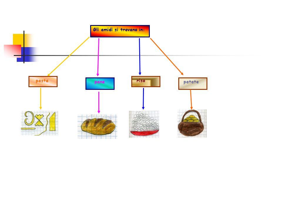 Gli amidi si trovano in: pasta pane riso patate