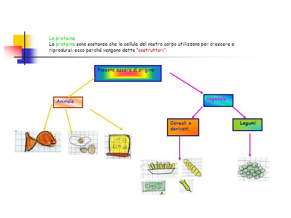 Le proteine Le proteine sono sostanze che le cellule del nostro corpo utilizzano per crescere e riprodursi, ecco perché vengono dette costruttori. Pos