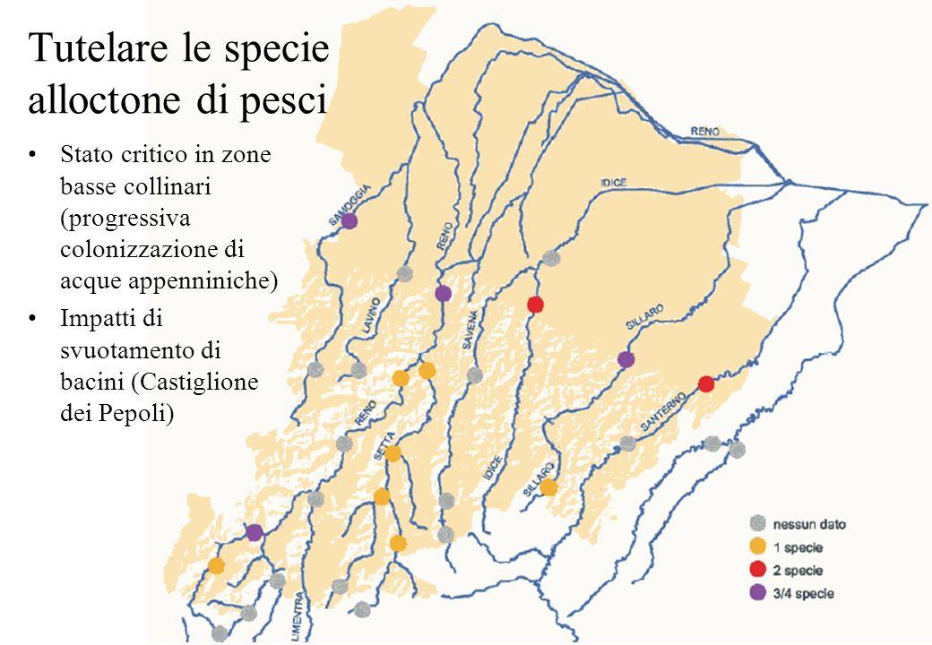 Tutelare le specie alloctone di pesci Stato critico in zone basse collinari (progressiva colonizzazione di acque appenniniche) Impatti di svuotamento