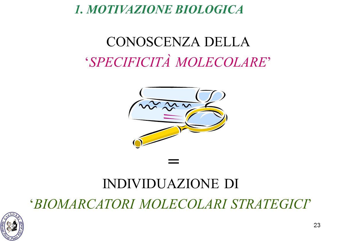 23 CONOSCENZA DELLA SPECIFICITÀ MOLECOLARE INDIVIDUAZIONE DI BIOMARCATORI MOLECOLARI STRATEGICI = 1. MOTIVAZIONE BIOLOGICA