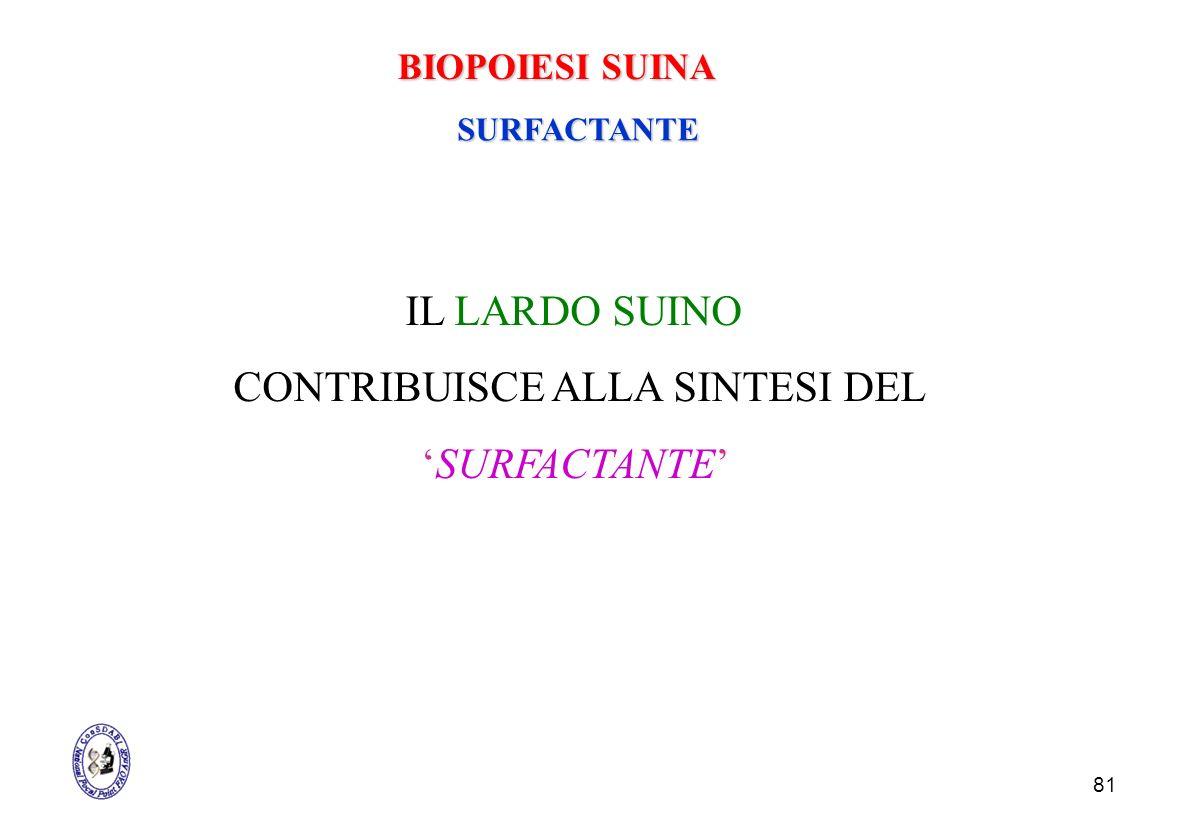 81 SURFACTANTE IL LARDO SUINO CONTRIBUISCE ALLA SINTESI DEL SURFACTANTE BIOPOIESI SUINA