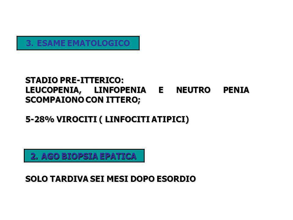 STADIO PRE-ITTERICO: LEUCOPENIA, LINFOPENIA E NEUTRO PENIA SCOMPAIONO CON ITTERO; 5-28% VIROCITI ( LINFOCITI ATIPICI) 2.AGO BIOPSIA EPATICA SOLO TARDI
