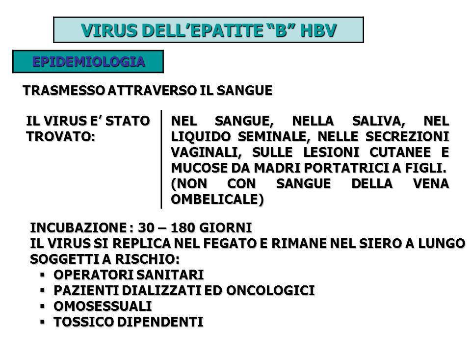 VIRUS DELLEPATITE B HBV EPIDEMIOLOGIA TRASMESSO ATTRAVERSO IL SANGUE IL VIRUS E STATO TROVATO: NEL SANGUE, NELLA SALIVA, NEL LIQUIDO SEMINALE, NELLE S