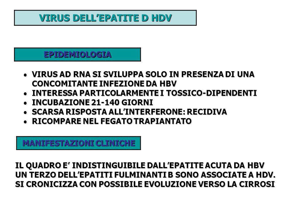 VIRUS DELLEPATITE D HDV EPIDEMIOLOGIA VIRUS AD RNA SI SVILUPPA SOLO IN PRESENZA DI UNA CONCOMITANTE INFEZIONE DA HBV VIRUS AD RNA SI SVILUPPA SOLO IN