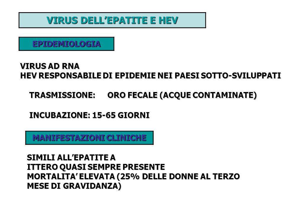 VIRUS DELLEPATITE E HEV EPIDEMIOLOGIA VIRUS AD RNA HEV RESPONSABILE DI EPIDEMIE NEI PAESI SOTTO-SVILUPPATI TRASMISSIONE: ORO FECALE (ACQUE CONTAMINATE