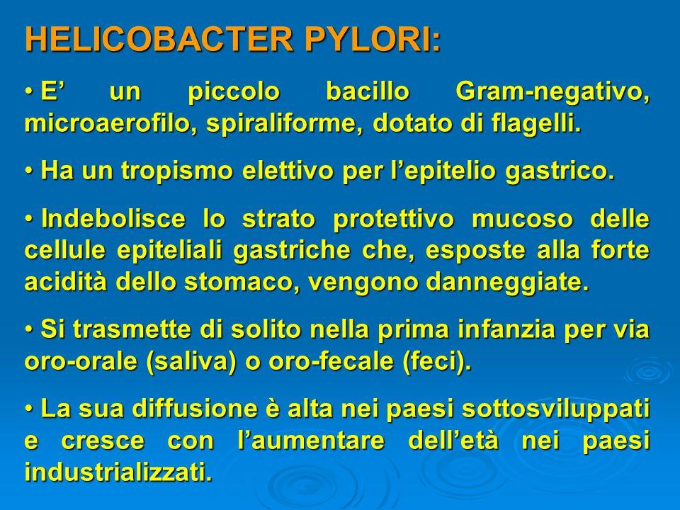 HELICOBACTER PYLORI: E un piccolo bacillo Gram-negativo, microaerofilo, spiraliforme, dotato di flagelli. E un piccolo bacillo Gram-negativo, microaer