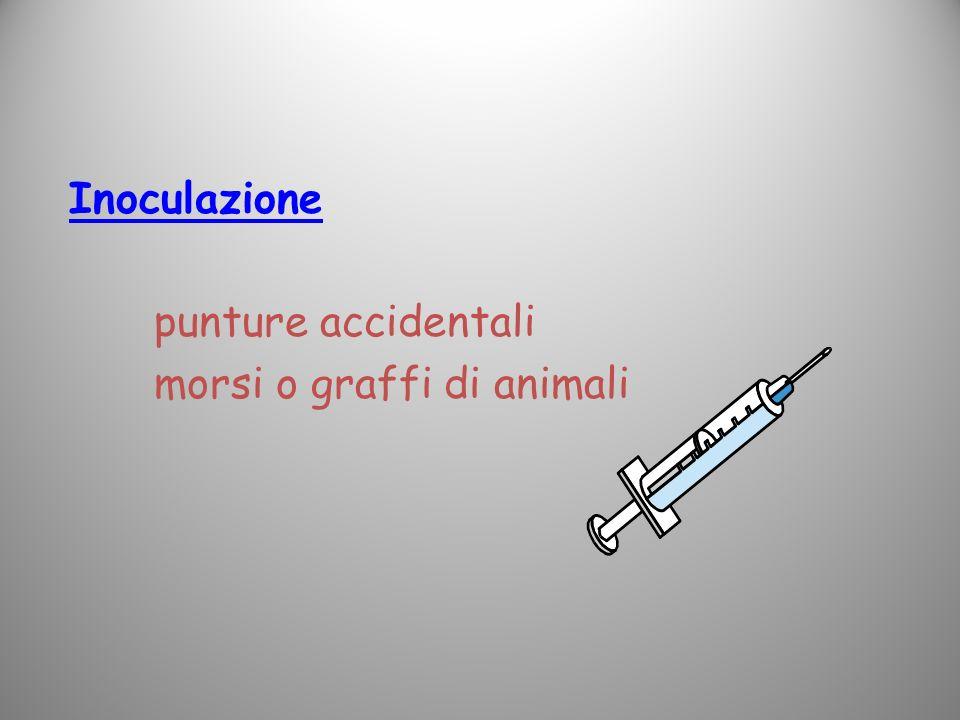 Inoculazione punture accidentali morsi o graffi di animali