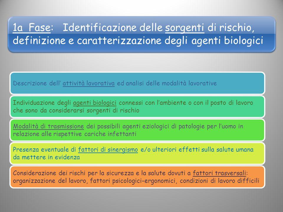 1a Fase: Identificazione delle sorgenti di rischio, definizione e caratterizzazione degli agenti biologici Descrizione dell attività lavorativa ed ana