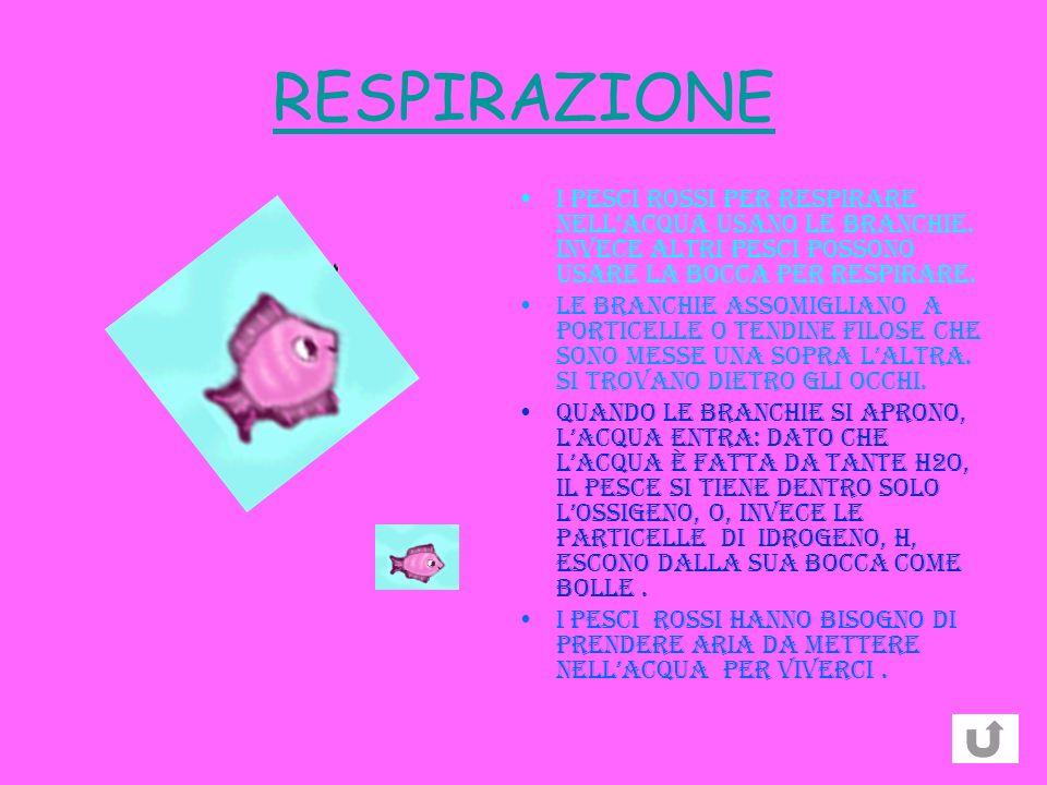 RESPIRAZIONE I pesci ROSSI per respirare nellacqua usano le branchie. Invece altri pesci possono usare la bocca per respirare. LE BRANCHIE assomiglian