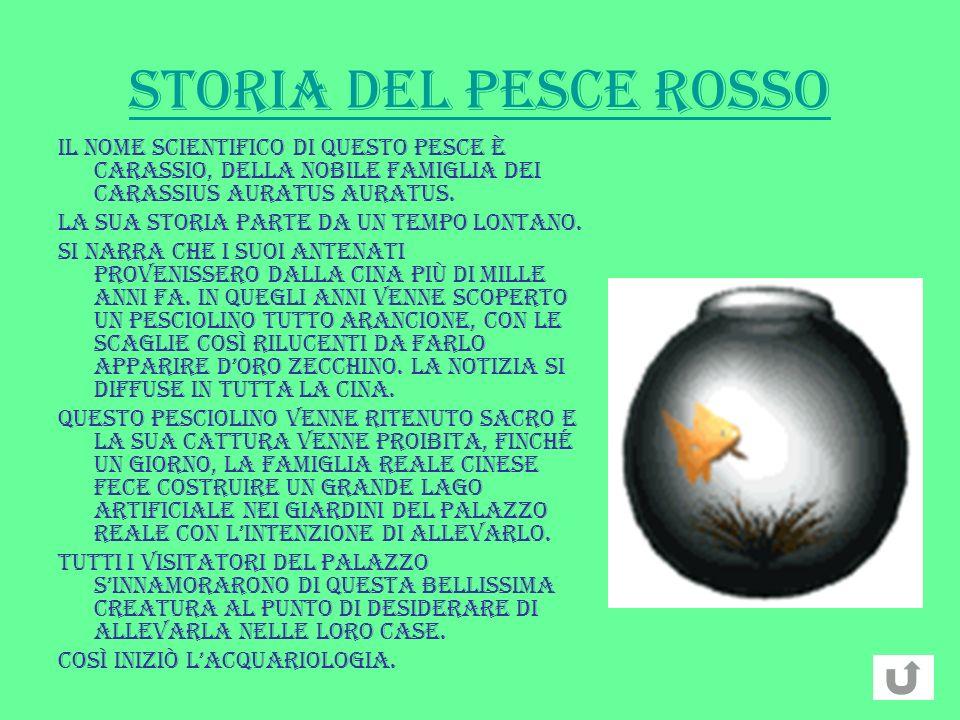 STORIA DEL PESCE ROSSO Il nome scientifico di questo pesce è Carassio, della nobile famiglia dei Carassius Auratus Auratus. La sua storia parte da un