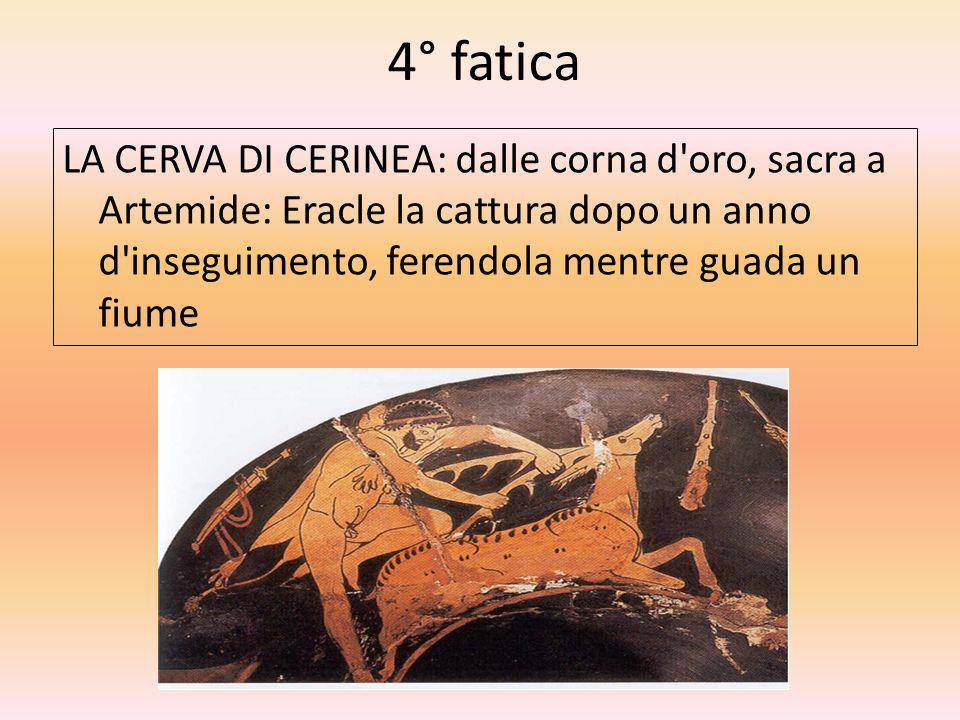 4° fatica LA CERVA DI CERINEA: dalle corna d'oro, sacra a Artemide: Eracle la cattura dopo un anno d'inseguimento, ferendola mentre guada un fiume