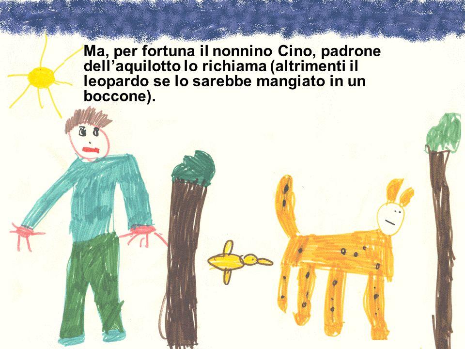 Ma, per fortuna il nonnino Cino, padrone dellaquilotto lo richiama (altrimenti il leopardo se lo sarebbe mangiato in un boccone).