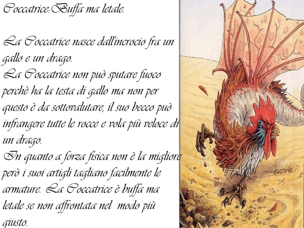 Coccatrice:Buffa ma letale.La Coccatrice nasce dall incrocio fra un gallo e un drago.