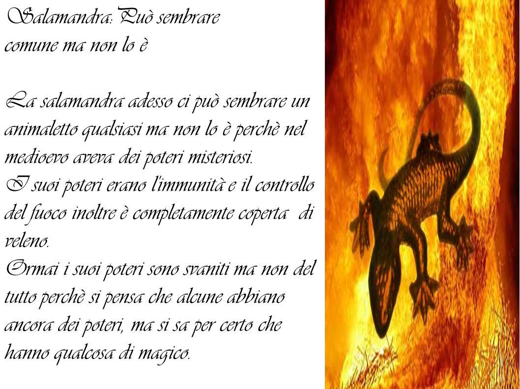 Salamandra:Può sembrare comune ma non lo è La salamandra adesso ci può sembrare un animaletto qualsiasi ma non lo è perchè nel medioevo aveva dei poteri misteriosi.