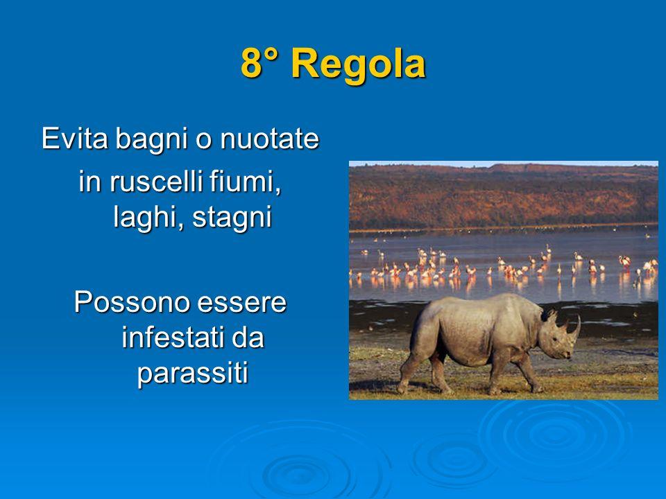 8° Regola Evita bagni o nuotate in ruscelli fiumi, laghi, stagni Possono essere infestati da parassiti