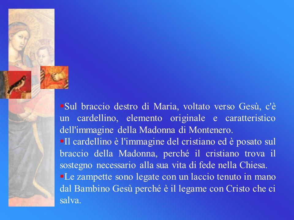 Sul braccio destro di Maria, voltato verso Gesù, c'è un cardellino, elemento originale e caratteristico dell'immagine della Madonna di Montenero. Il c