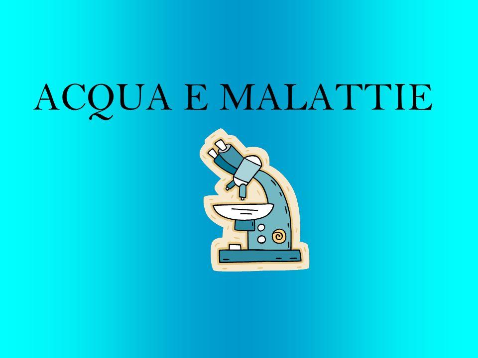 Lacqua rappresenta la componente principale (73,2%) della massa magra del nostro organismo, ed è essenziale per un buono stato di salute.