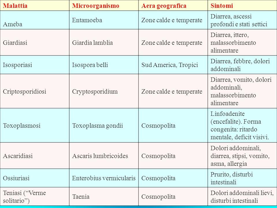 MalattiaMicroorganismoAera geograficaSintomi Ameba EntamoebaZone calde e temperate Diarrea, ascessi profondi e stati settici GiardiasiGiardia lambliaZ