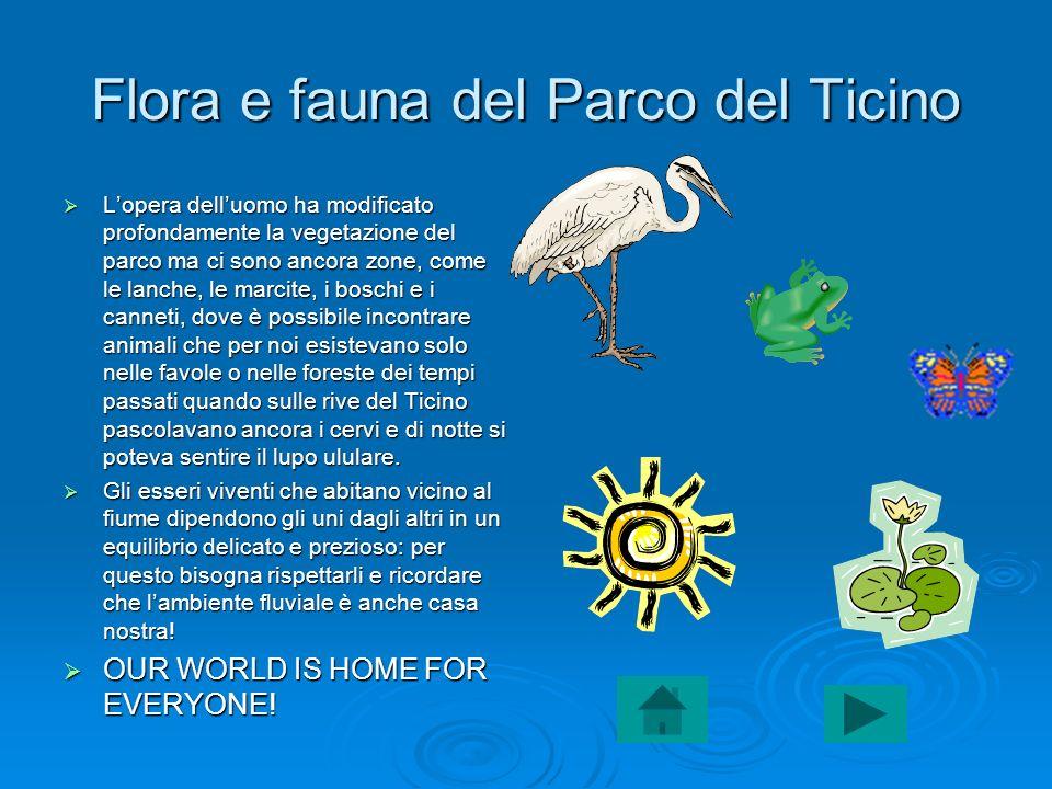 Flora e fauna del Parco del Ticino Lopera delluomo ha modificato profondamente la vegetazione del parco ma ci sono ancora zone, come le lanche, le mar