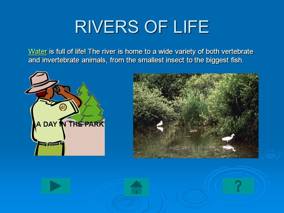 RIVERS OF LIFE WaterWater is full of life! The river is home to a wide variety of both vertebrate and invertebrate animals, from the smallest insect t