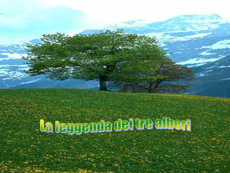 Tre alberi erano cresciuti vicini, su una bella montagna.