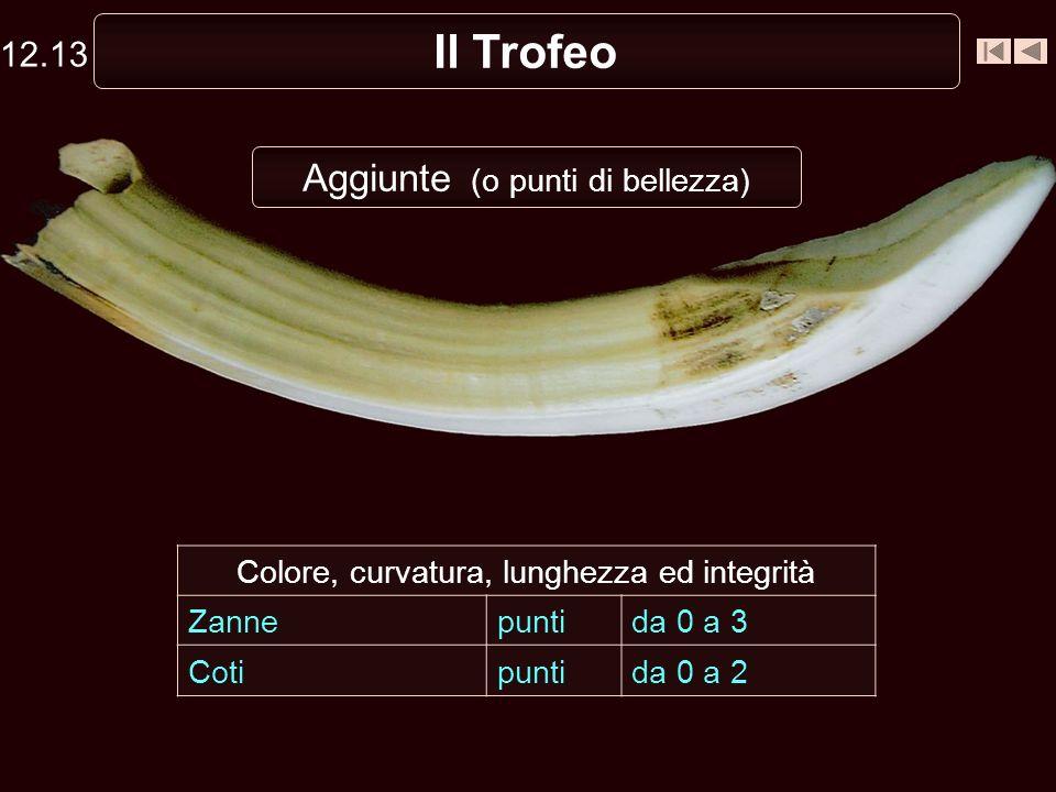 Il Trofeo Aggiunte (o punti di bellezza) Colore, curvatura, lunghezza ed integrità Zannepuntida 0 a 3 Cotipuntida 0 a 2 12.13
