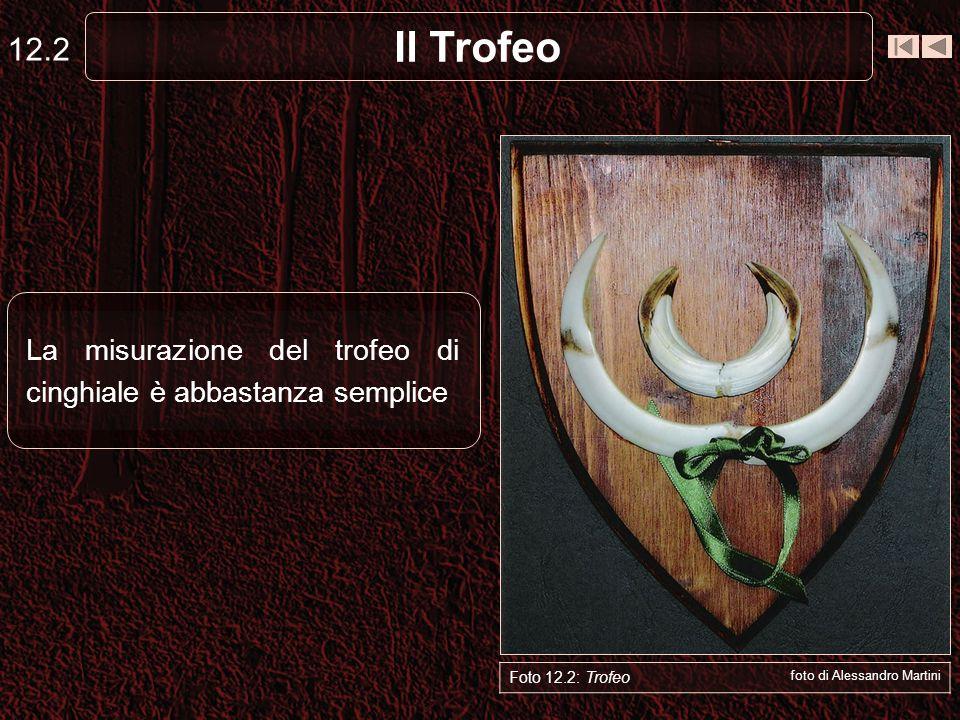 Il Trofeo 12.3 Foto 12.2: Trofeo foto di Alessandro Martini - Le misure del trofeo riguardano: - La lunghezza e la larghezza per le zanne - La circonferenza per le coti