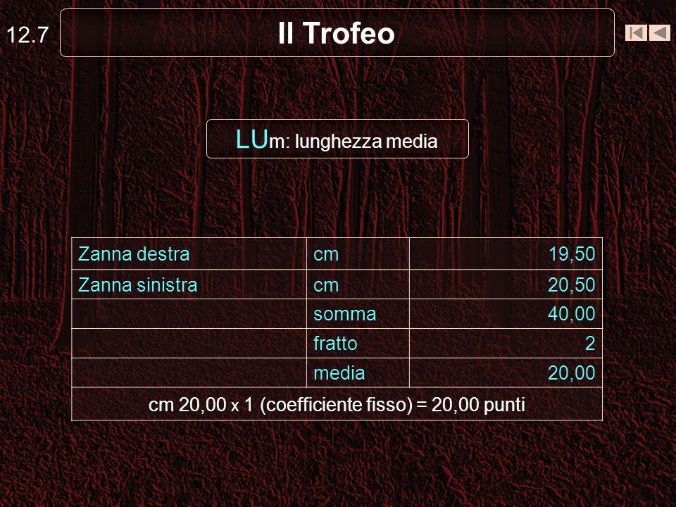 Il Trofeo 12.7 LU m: lunghezza media Zanna destracm19,50 Zanna sinistracm20,50 somma40,00 fratto2 media20,00 cm 20,00 x 1 (coefficiente fisso) = 20,00 punti