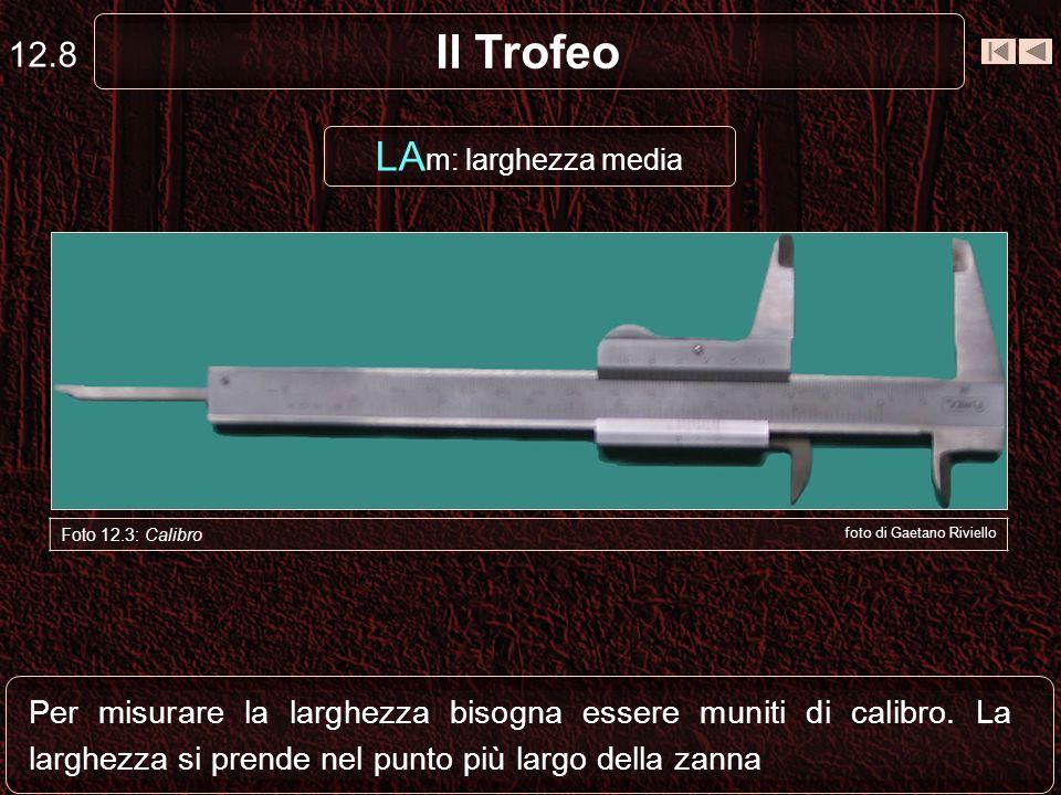 Il Trofeo 12.9 LA m: larghezza media Zanna destramm21,15 Zanna sinistramm21,05 somma42,20 fratto2 media21,10 mm 21,10 x 3 (coefficiente fisso) = 63,30 punti