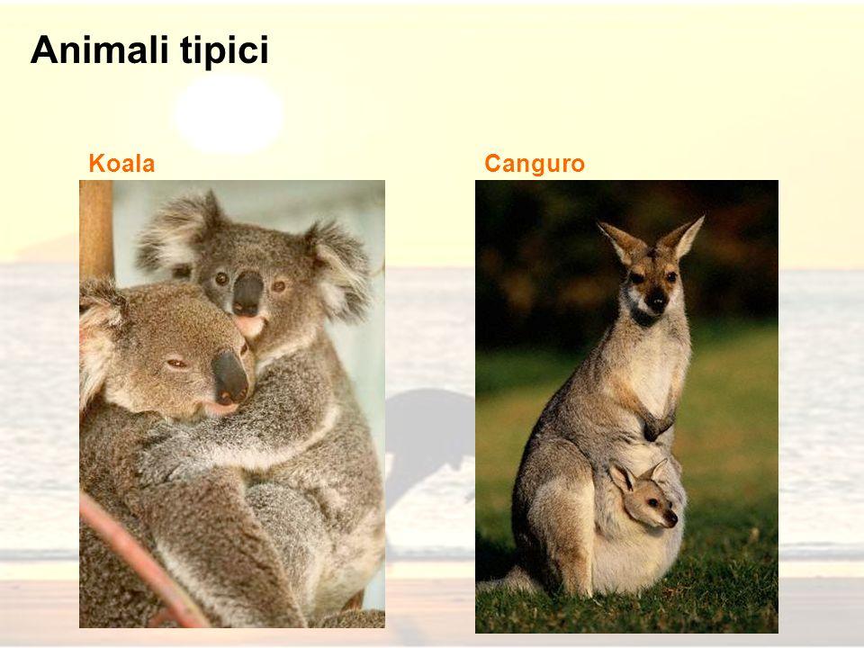 Animali tipici KoalaCanguro