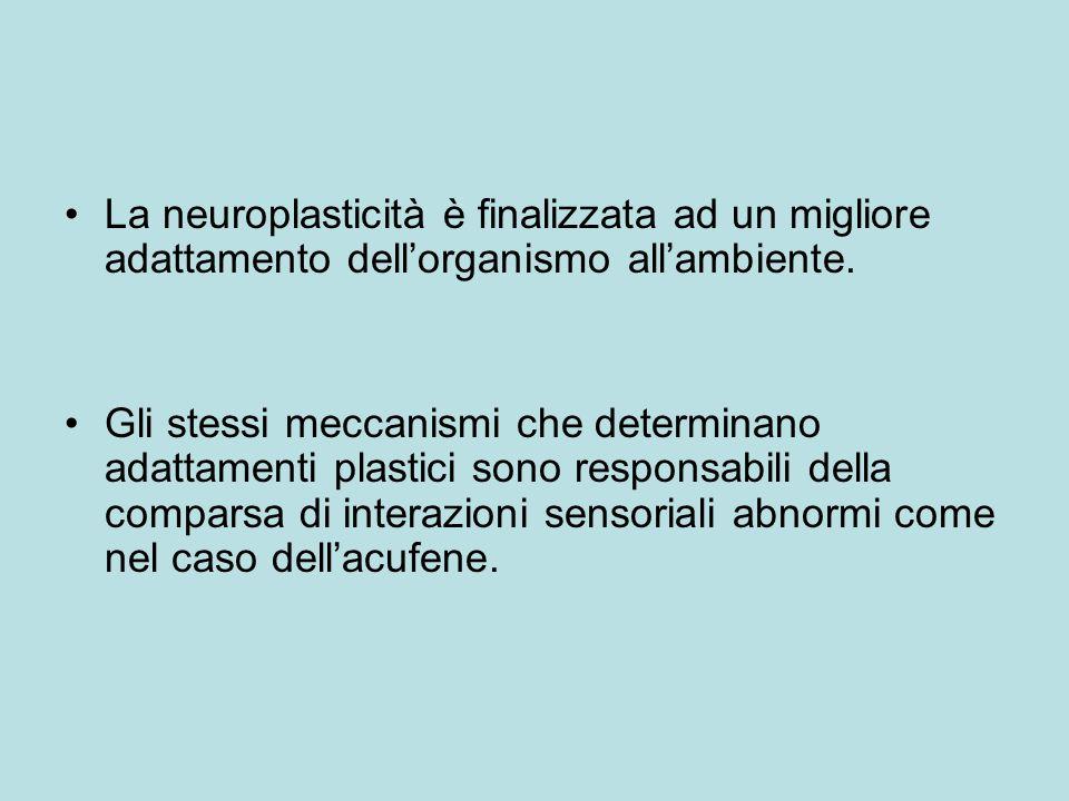 La neuroplasticità è finalizzata ad un migliore adattamento dellorganismo allambiente.