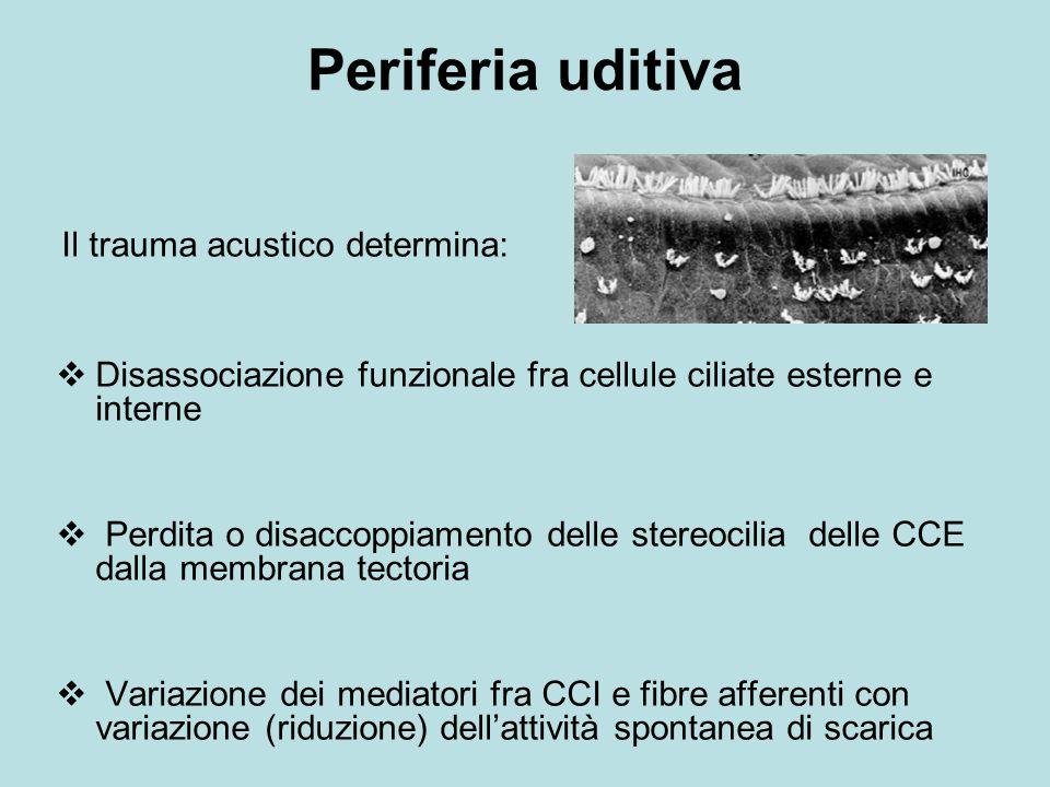 Periferia uditiva Il trauma acustico determina: Disassociazione funzionale fra cellule ciliate esterne e interne Perdita o disaccoppiamento delle stereocilia delle CCE dalla membrana tectoria Variazione dei mediatori fra CCI e fibre afferenti con variazione (riduzione) dellattività spontanea di scarica