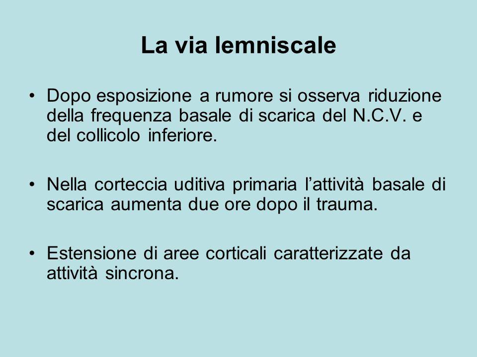 La via lemniscale Dopo esposizione a rumore si osserva riduzione della frequenza basale di scarica del N.C.V.